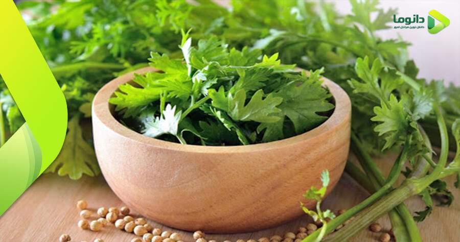 مراحل و نکات کاشت گیاه گشنیز در گلدان و باغچه